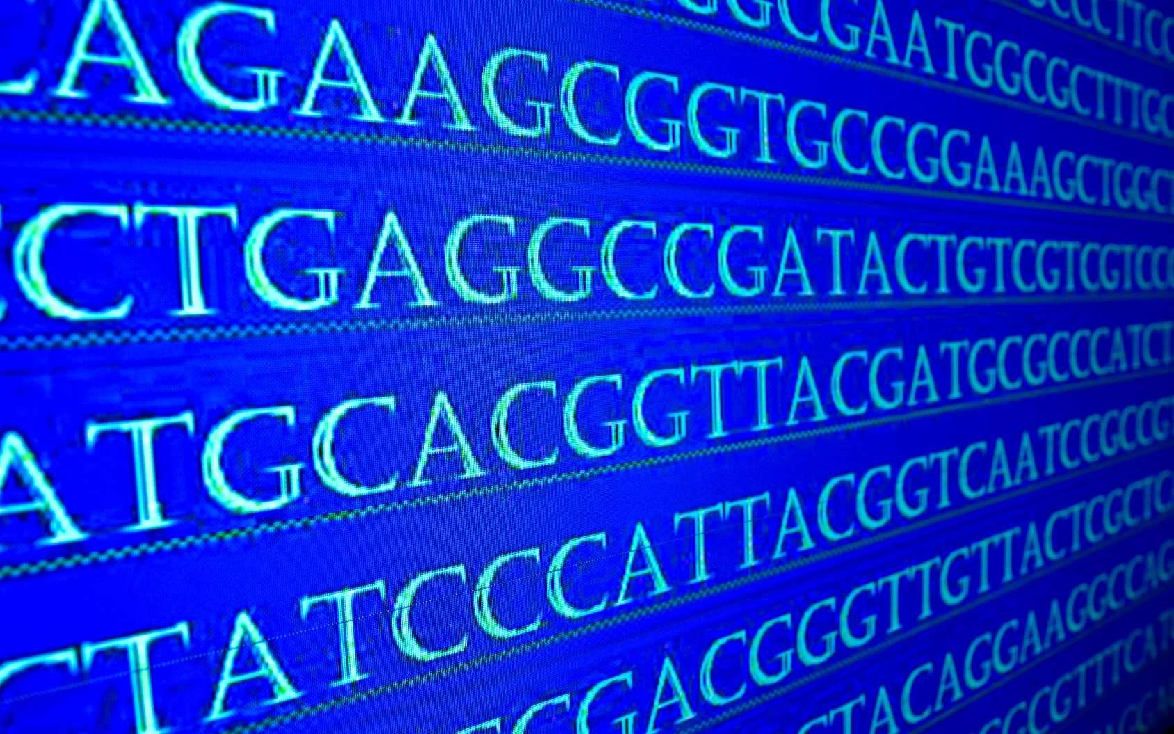 La génomique analyse la structure et la fonction des génomes. © sergunt, Fotolia