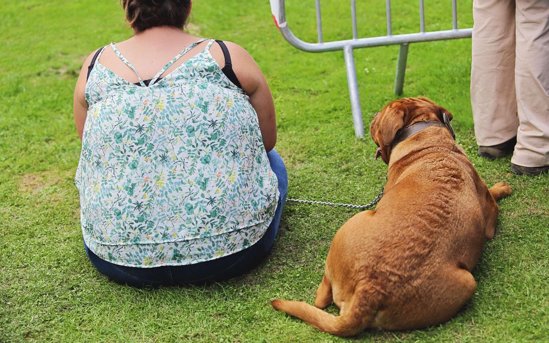 Diabète chez le chien, diabète chez le maître ? © mariesacha, Adobe, Stock
