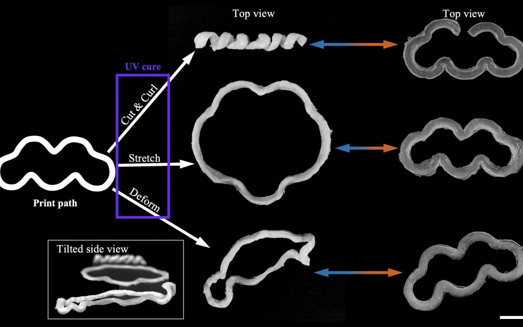 Une équipe de chercheurs a mis au point une technique pour imprimer en 3D des matériaux qui se déforment sous l'effet de la chaleur. © Université Rice