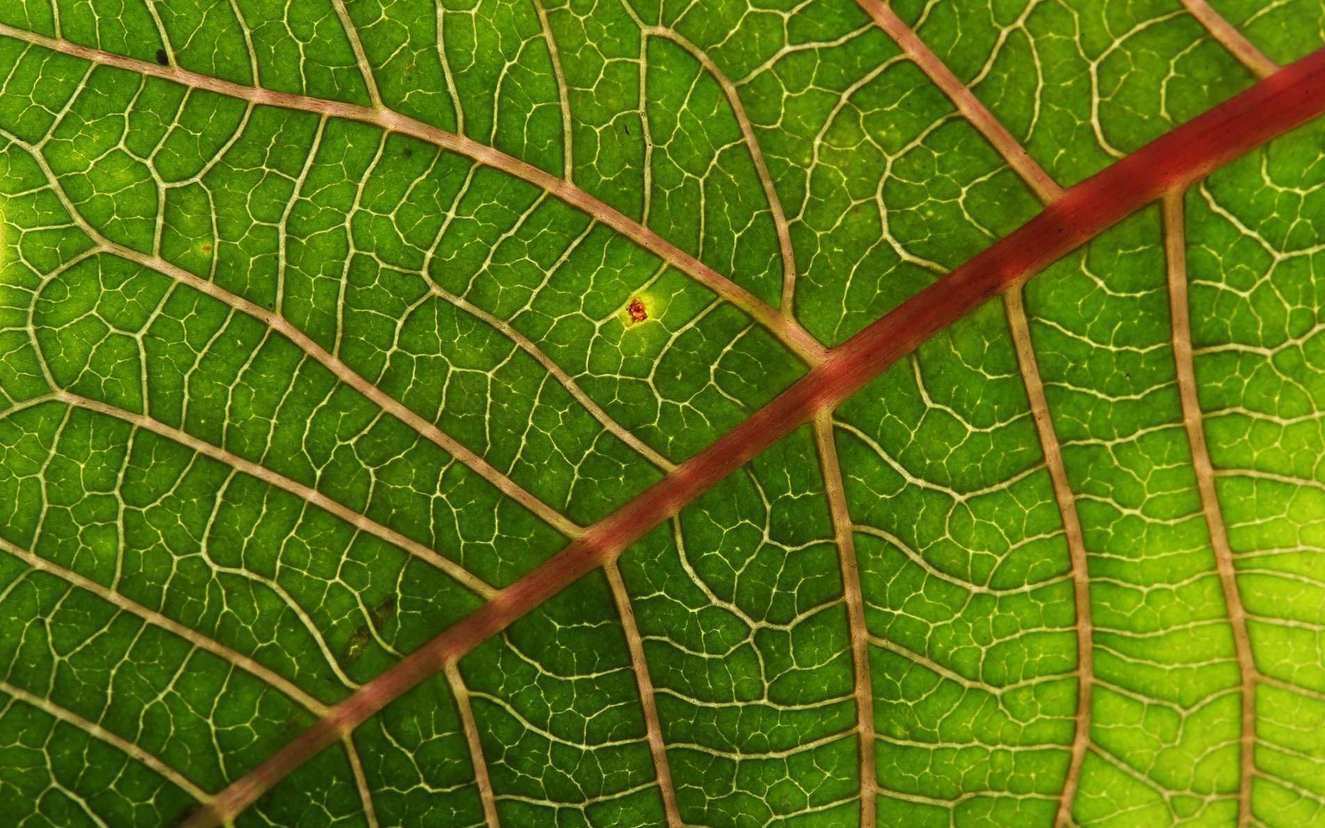 Dans la photosynthèse inverse, l'énergie des rayons du soleil sert à dégrader des macromolécules, au lieu de construire des molécules végétales comme c'est le cas dans la photosynthèse. De quoi, peut-être, produire les biocarburants de demain ? © Sutichak, Shutterstock
