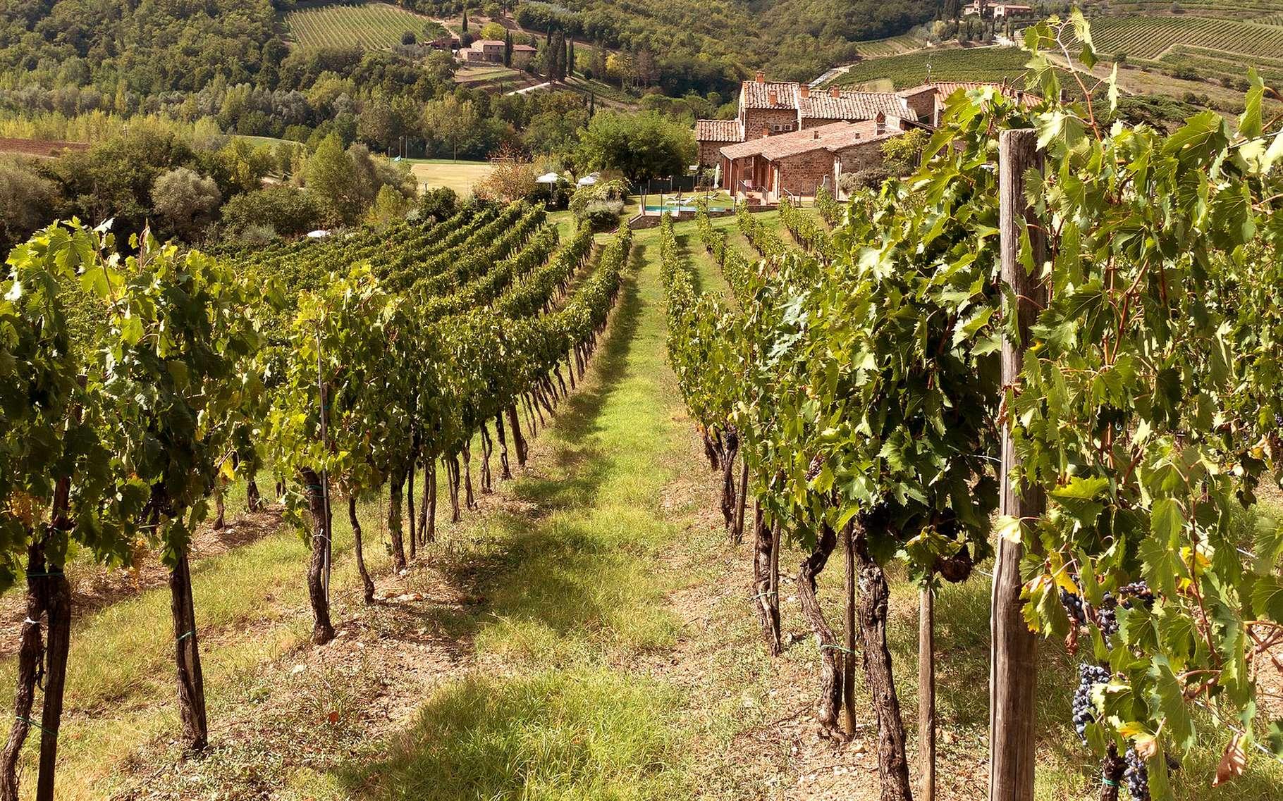 Comment Planter Une Vigne Grimpante la vigne et le sol, ou comment faire du vin   dossier