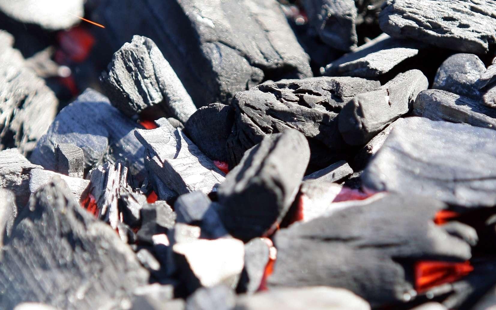 L'anthrax est le terme anglo-saxon donné à la maladie du charbon, ou fièvre charbonneuse. © Phovoir