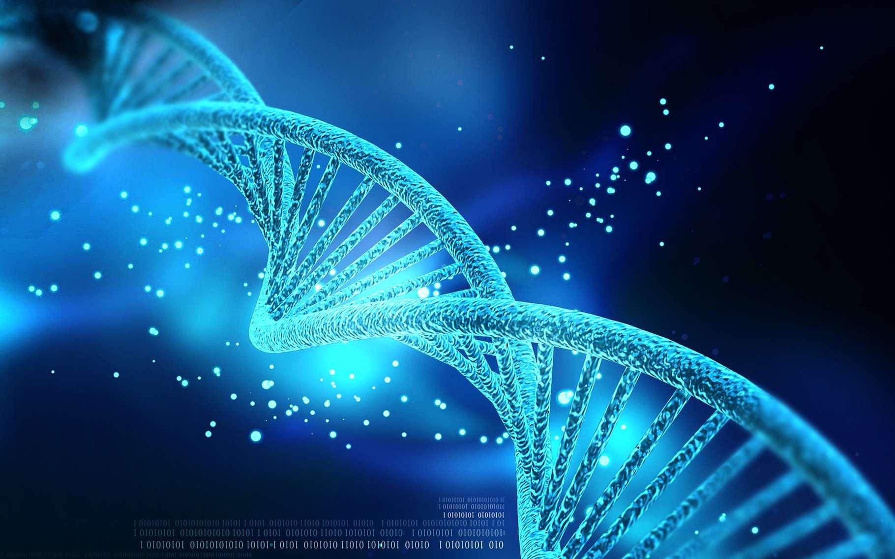 L'ADN, support des gènes, est une molécule très bien organisée. © Creations, Shutterstock