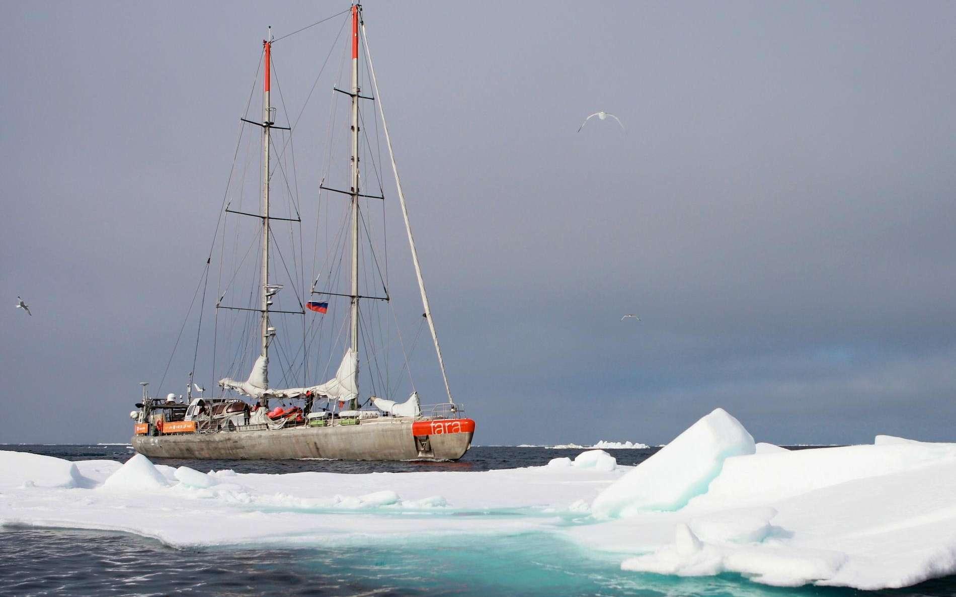 La goélette Tara lors de son expédition en Arctique en 2013. © Anna Deniaud, Fondation Tara Expéditions
