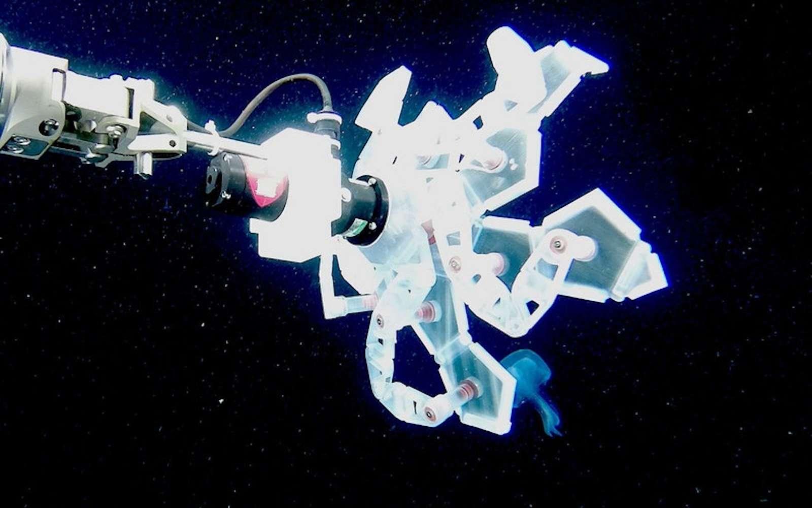 Le robot est un assemblage de 12 pentagones imprimés en 3D qui se déplient comme des pétales pour former une pince. © Wyss Institute at Harvard University