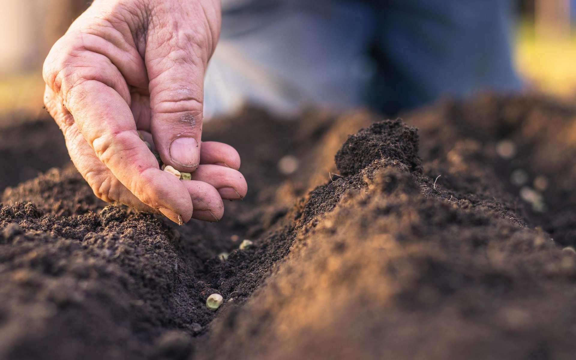 La quantité de phosphate présente dans les sols s'amenuise petit à petit. © Encierro, Adobe Stock
