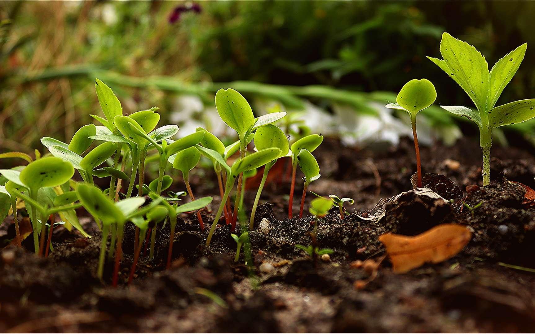 L'humus est issu de la décomposition de matières organiques. Feuilles, morceaux de bois... entrent dans la composition d'un bon compost. © Whisperinglane - ARSM, Pixabay, DP