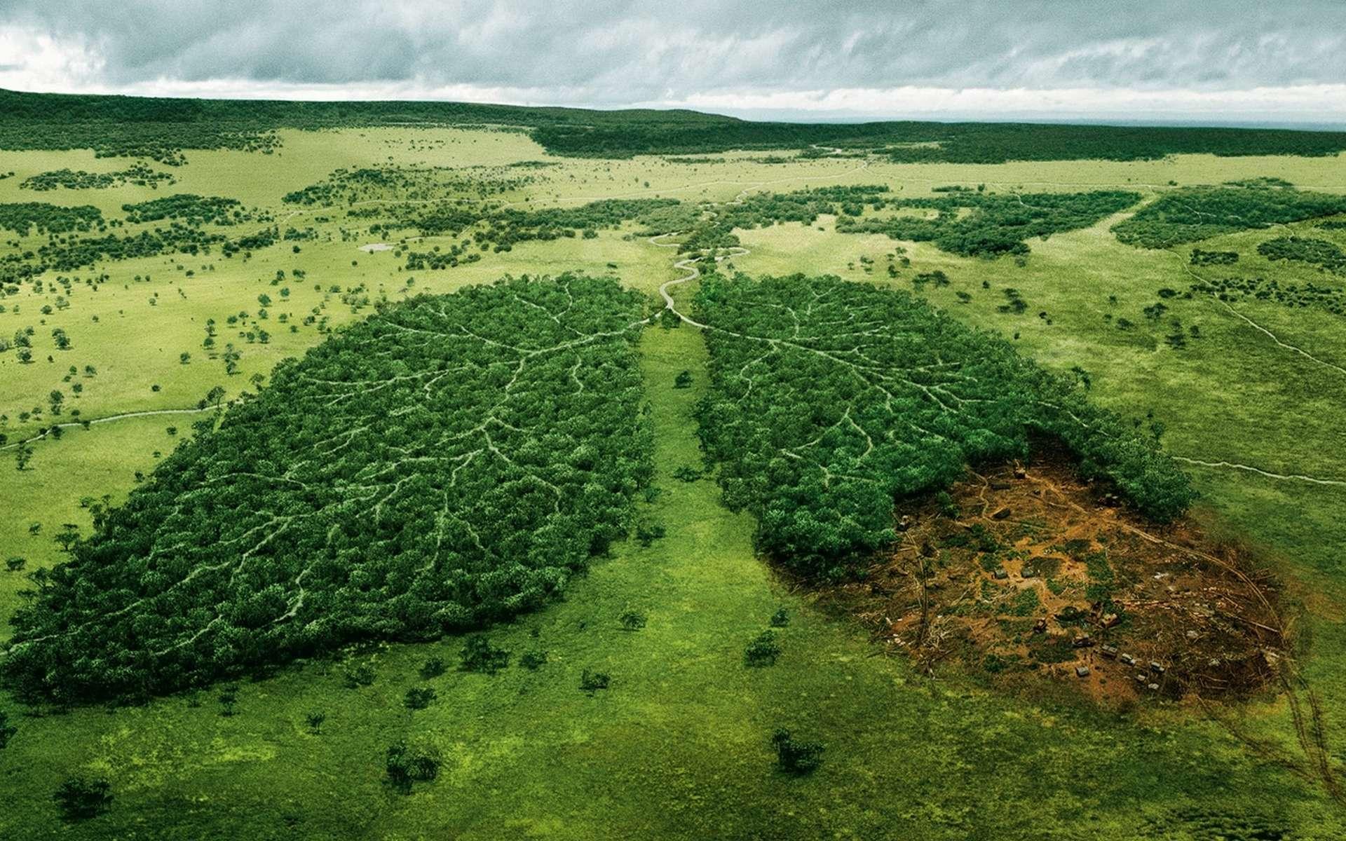 Campagne WWF contre la déforestation. © WWF