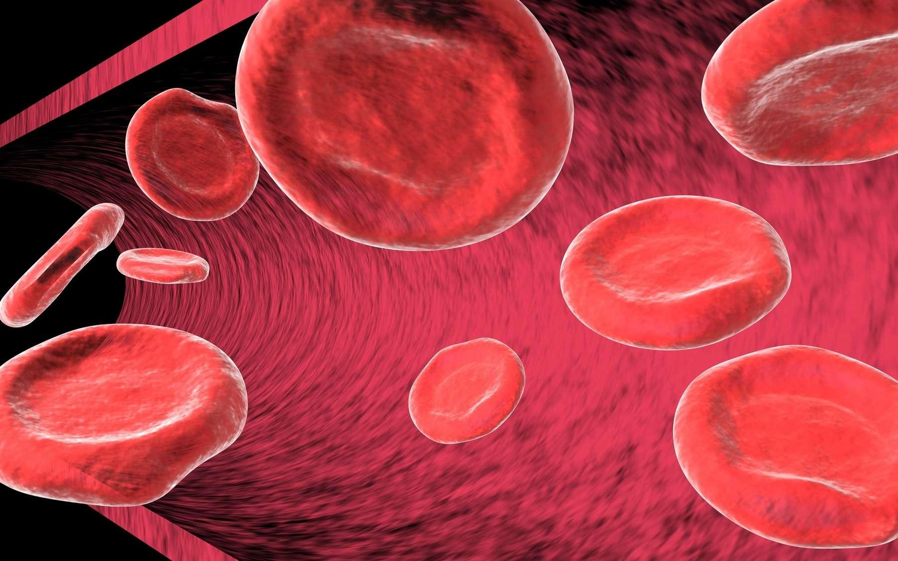 Les globules rouges transportent l'oxygène grâce à l'hémoglobine. © Martin Bangemann, Fotolia