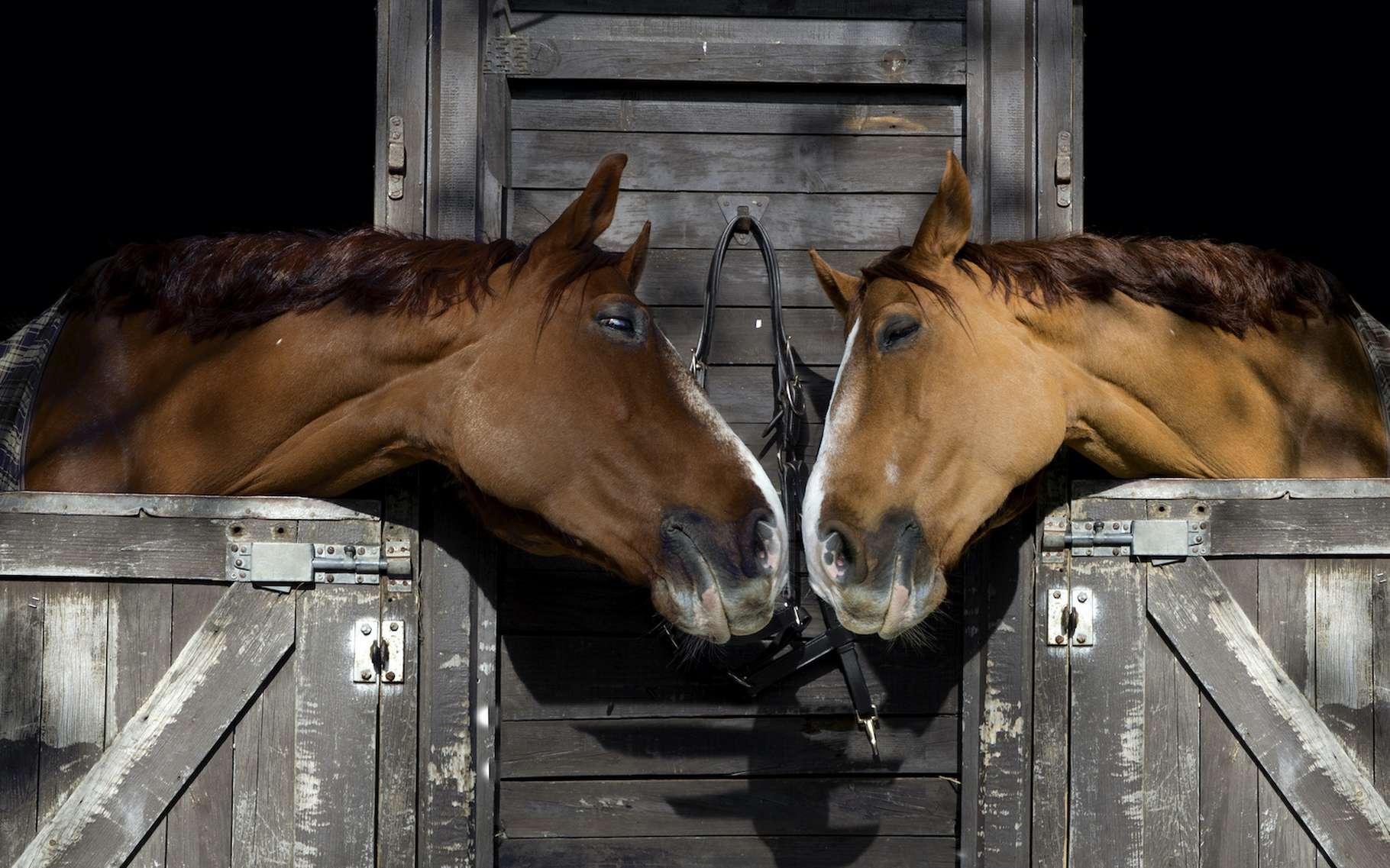 L'amour est l'une de ces émotions que les animaux peuvent ressentir. Et s'il est parfois dit que l'amour rend aveugle, être capable d'éprouver cette émotion est le signe que nos amis les animaux ne sont pas si bêtes. © lfmpereira, Adobe Stock