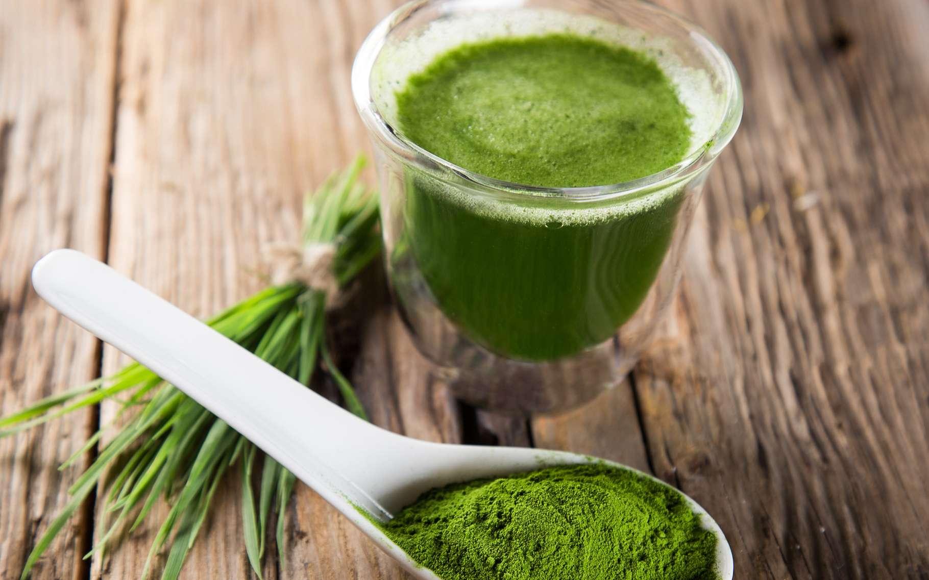 La spiruline est considérée comme l'un des aliments les plus bénéfiques pour la santé. © Lukas Gojda, Shutterstock