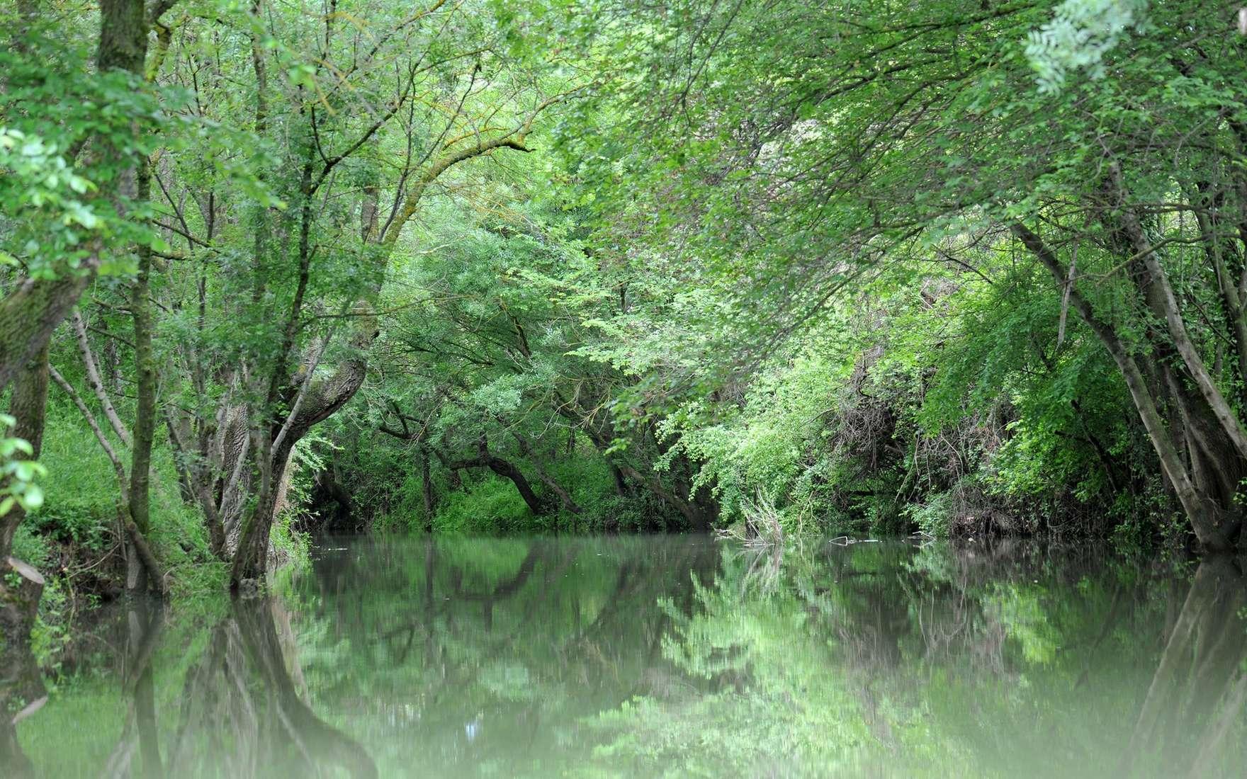 La ripisylve est l'ensemble de la végétation boisée située à proximité des cours d'eau. © cynoclub, Fotolia
