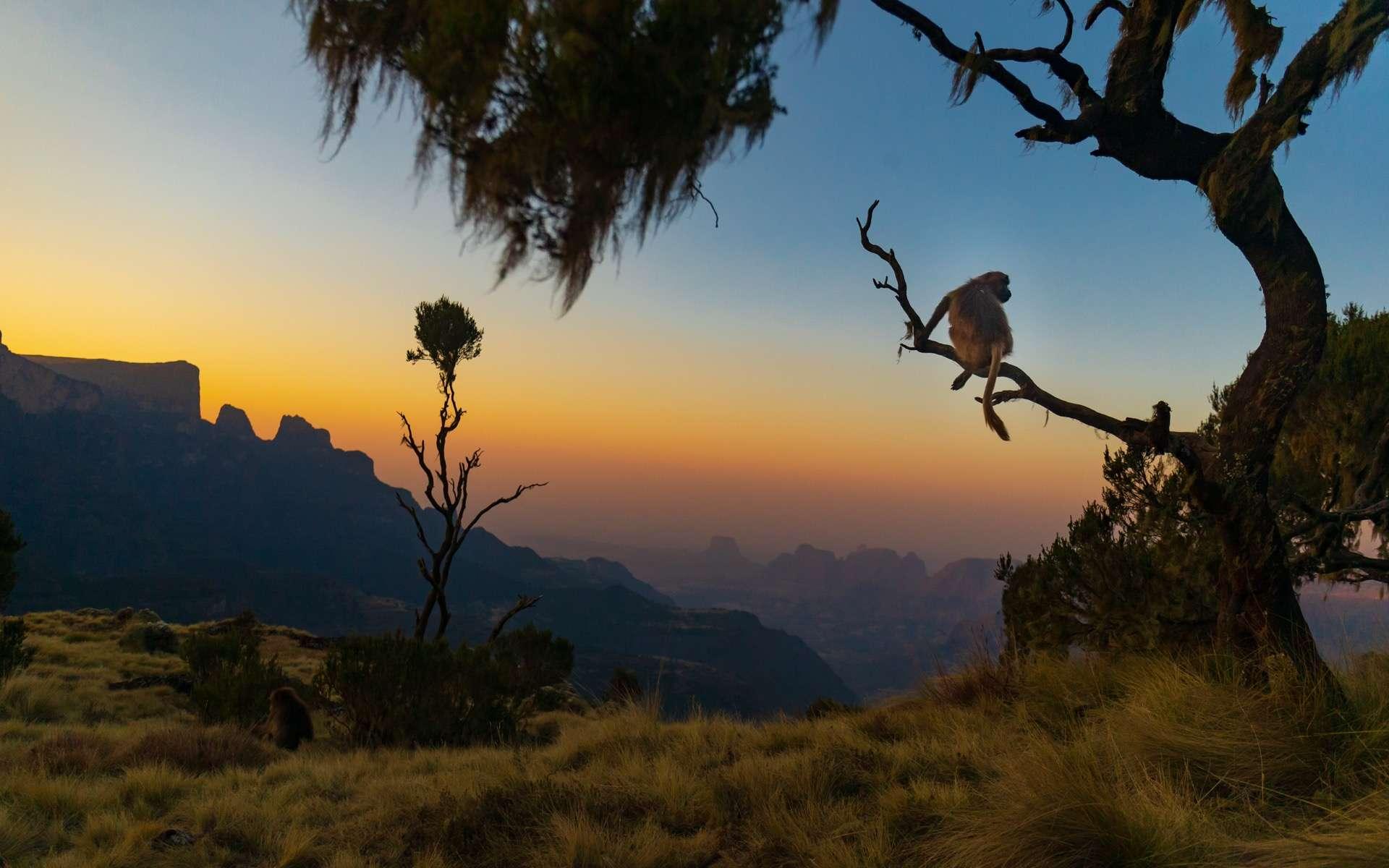 Premières propositions pour un plan mondial pour la biodiversité à 2030. © Christian, Adobe Stock