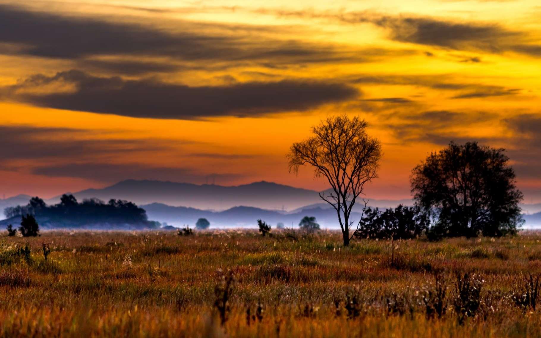Les écosystèmes réagissent de manière complexe au climat et à ses variations. Pour mieux le comprendre, il faut reproduire différents types de milieux, à petite échelle, dans un laboratoire. Il devient alors possible de prédire l'évolution d'un milieu réel, comme une prairie. © hak seob kim , Shutterstock