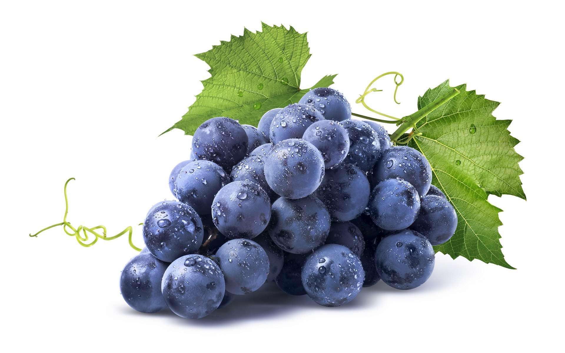 Le resvératrol des raisins noirs est un flavonoïde. © Kovaleva_Ka, Shutterstock