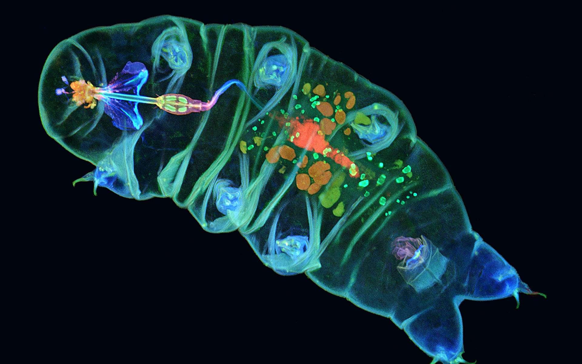 Les plus belles photos scientifiques sous l'objectif du microscope. © Ainara Pintor, Tagide deCarvalho, Olympus