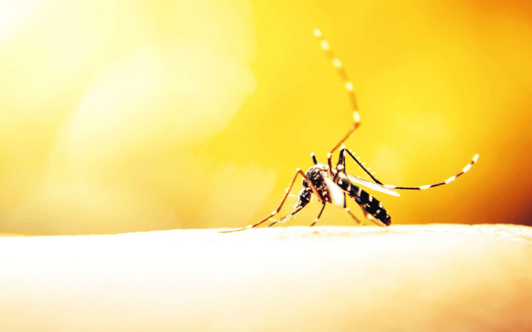 Selon certaines études, les moustiques préféreraient les peaux des femmes et celles plus sucrées. Toutefois, chacun réagit différemment aux piqûres. Cela peut donner l'impression que les moustiques piquent certaines personnes plus que d'autres sans que cela soit forcément le cas. © Apichart Meesri, Shutterstock