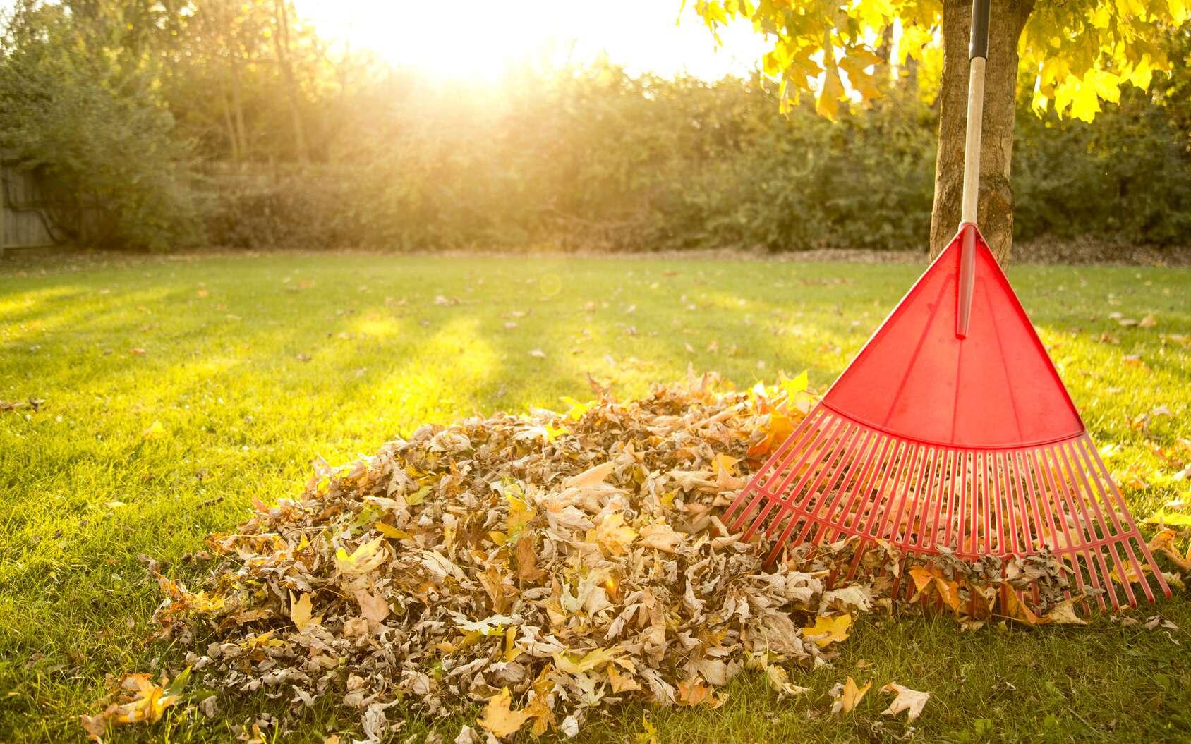 Les feuilles mortes ramassées à l'automne pourront être compostées ou servir de paillage aux jeunes plantations. © Todd Taulman, fotolia
