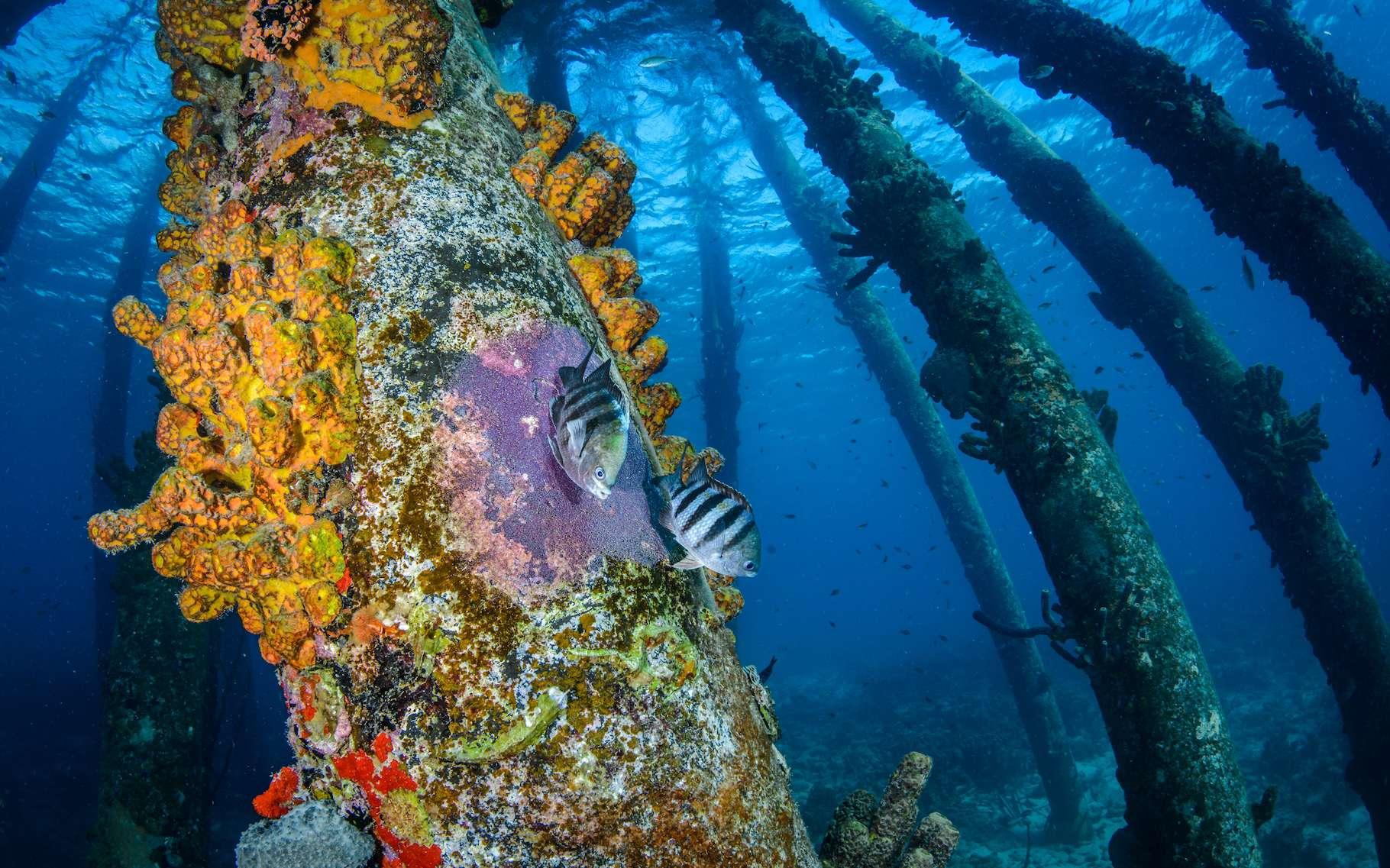 À l'occasion de la Journée mondiale de l'océan, la Fondation Dassault Système enrichit Mission Océan de trois nouveaux contenus éducatifs. © Ron Watkins, Fondation Dassault Systèmes