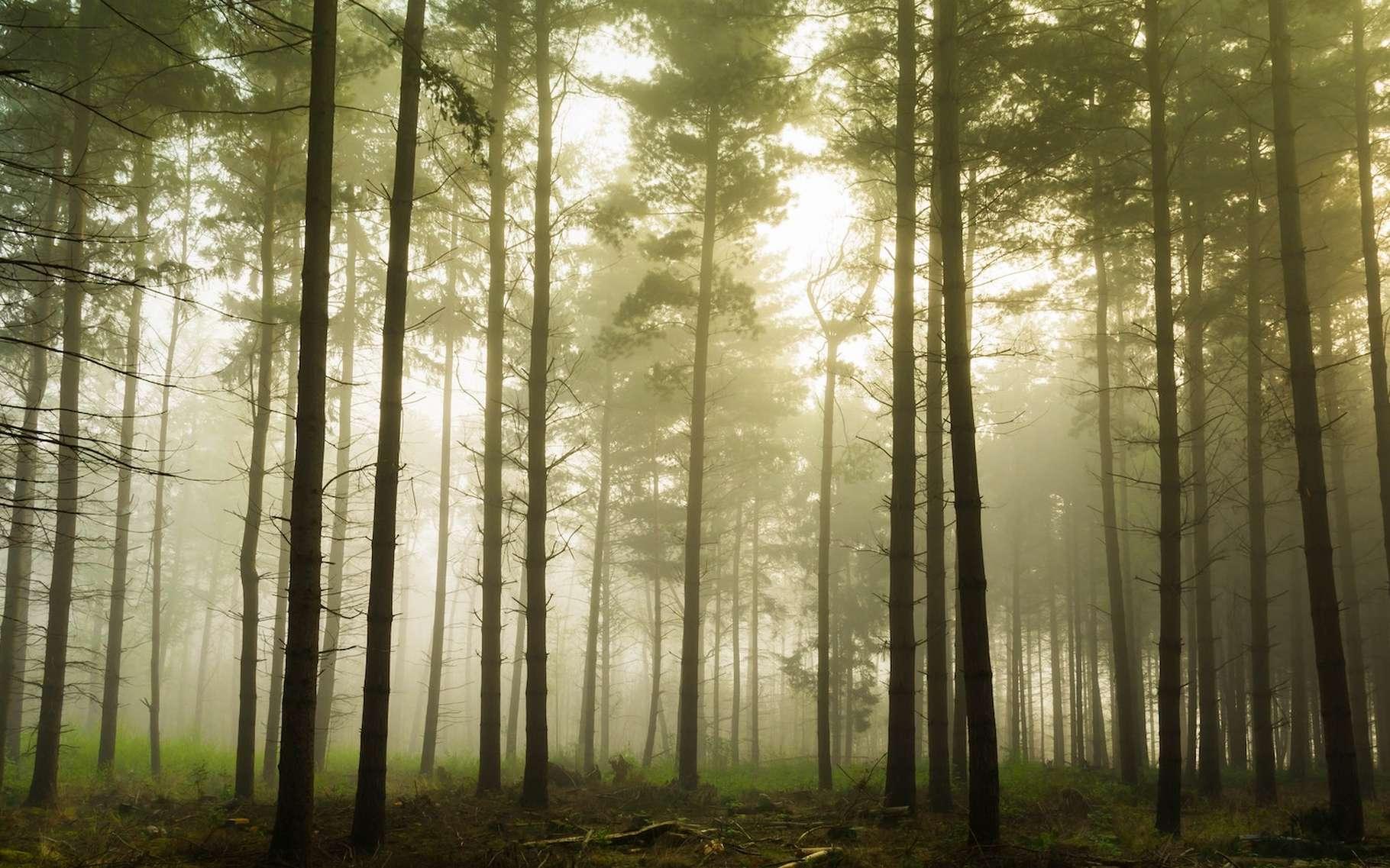 Une étude révèle que la pression de vapeur et les variations de température sont les facteurs climatiques qui affectent le plus nos forêts. © Julien R, Unsplash