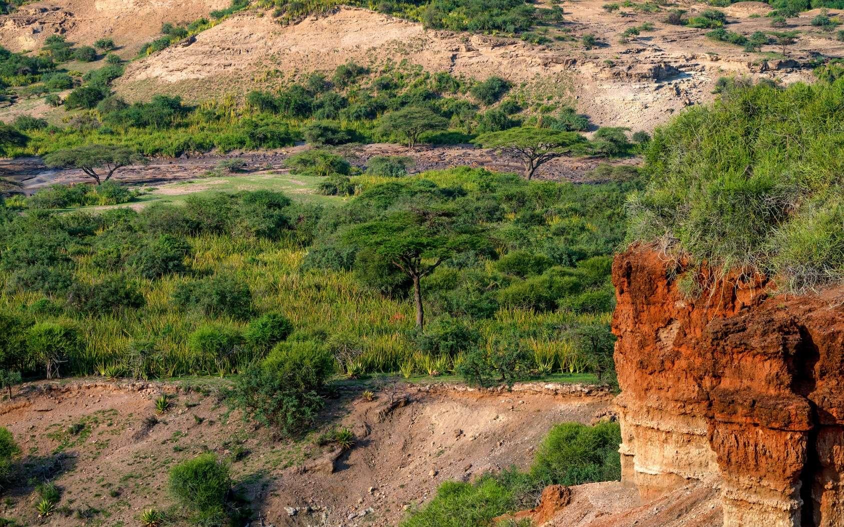 En Tanzanie, le site d'Olduvai est connu pour avoir révélé des milliers d'ossements fossiles. © Yakov, Fotolia