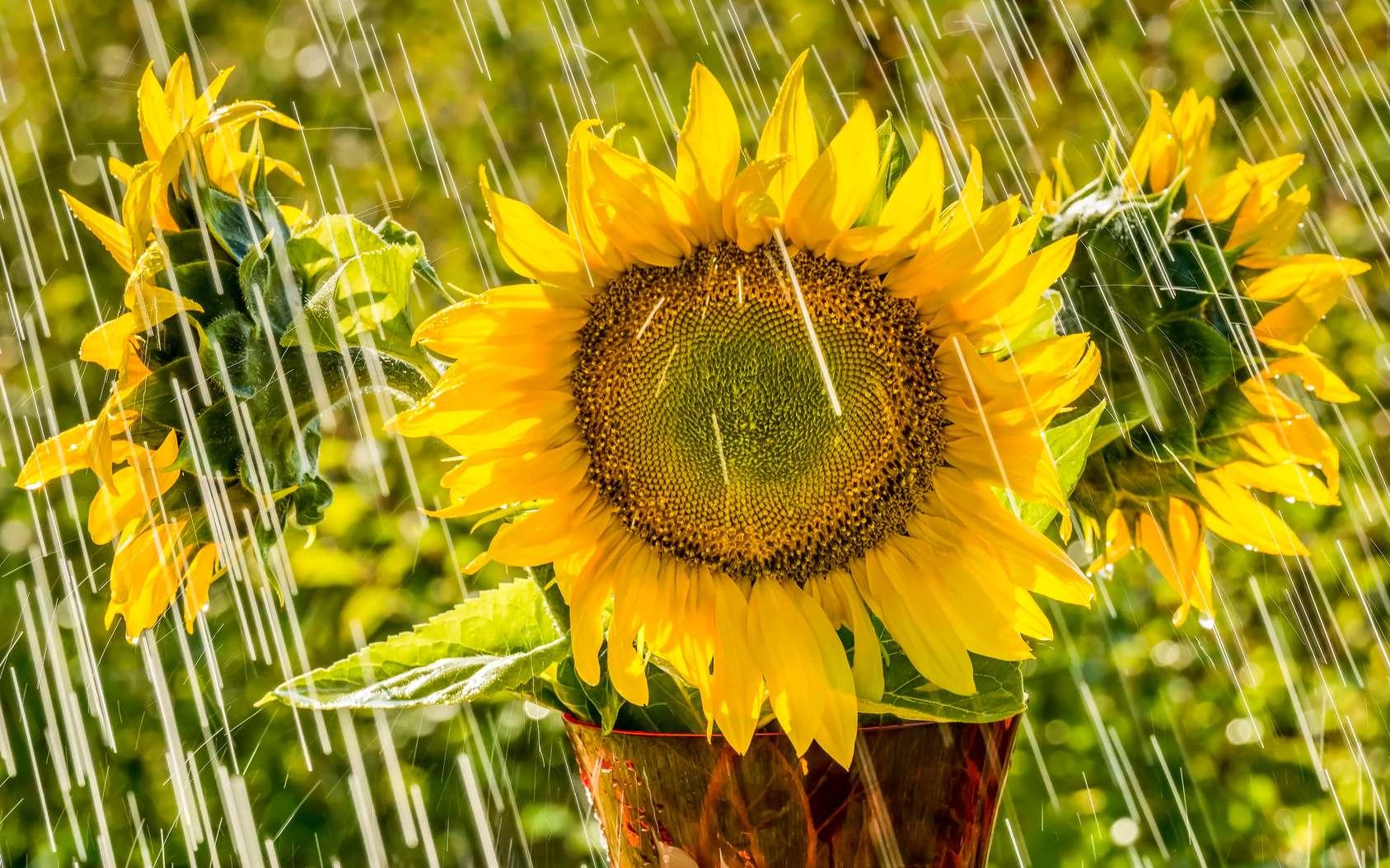 Faire un puisard nécessite de connaître la pluviométrie de la région ou encore la capacité de drainage de votre sol. © ais60, Fotolia