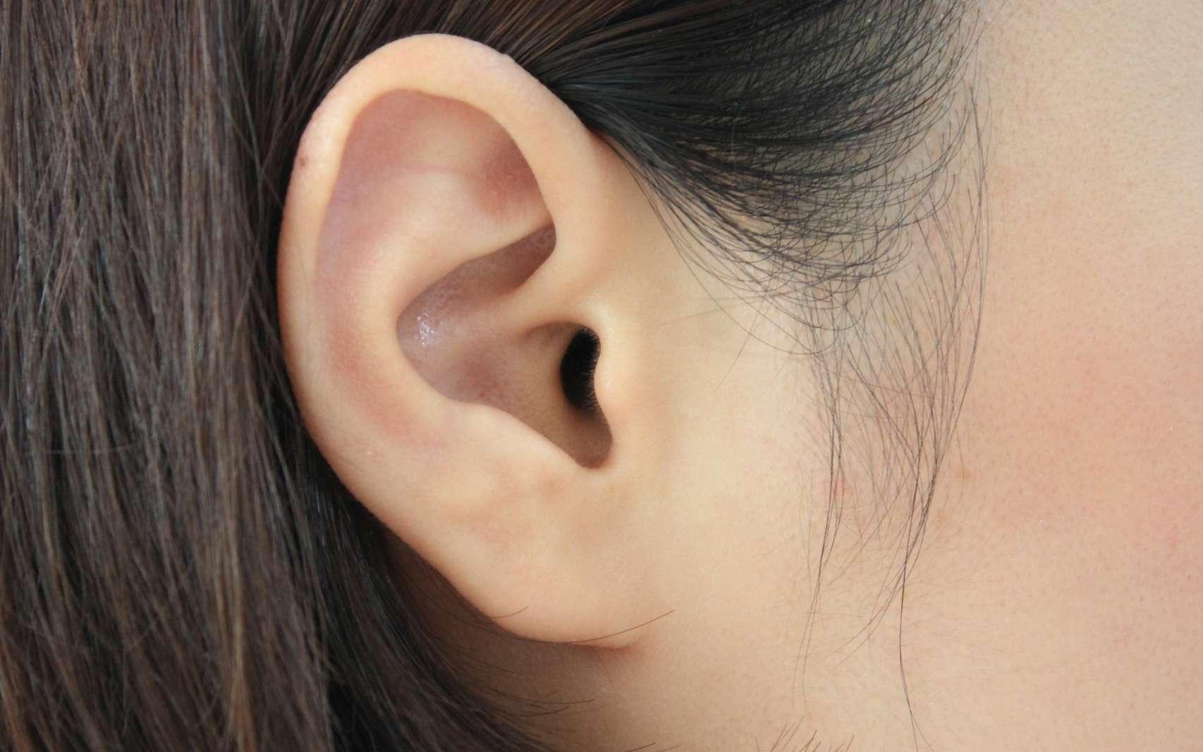 L'hydrops est une accumulation d'endolymphe dans l'oreille interne. © Kwangmoo, Fotolia