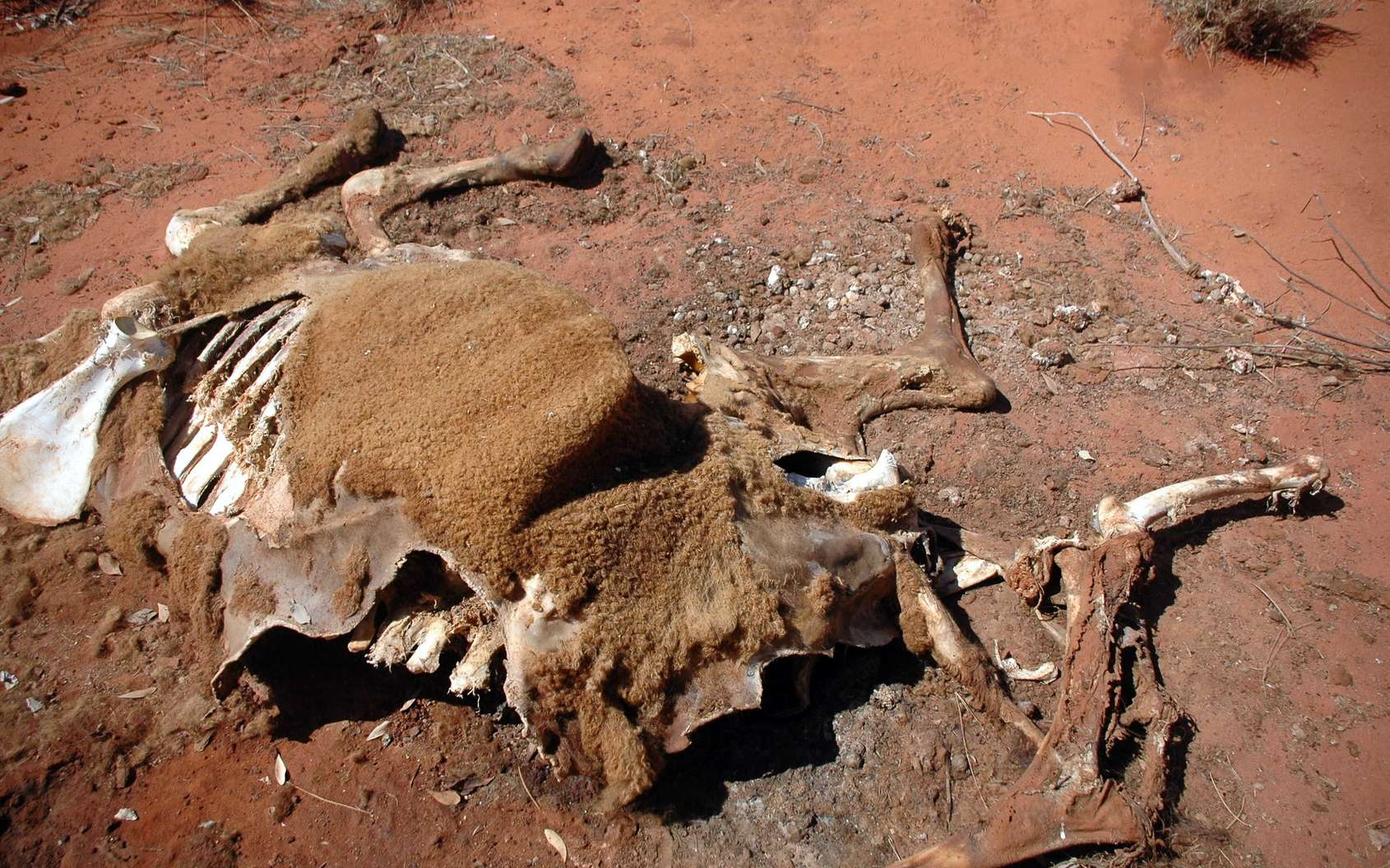 En Australie, les animaux sauvages et le bétail meurent de soif en raison de la sécheresse. © Ivo Goetz, Fotolia