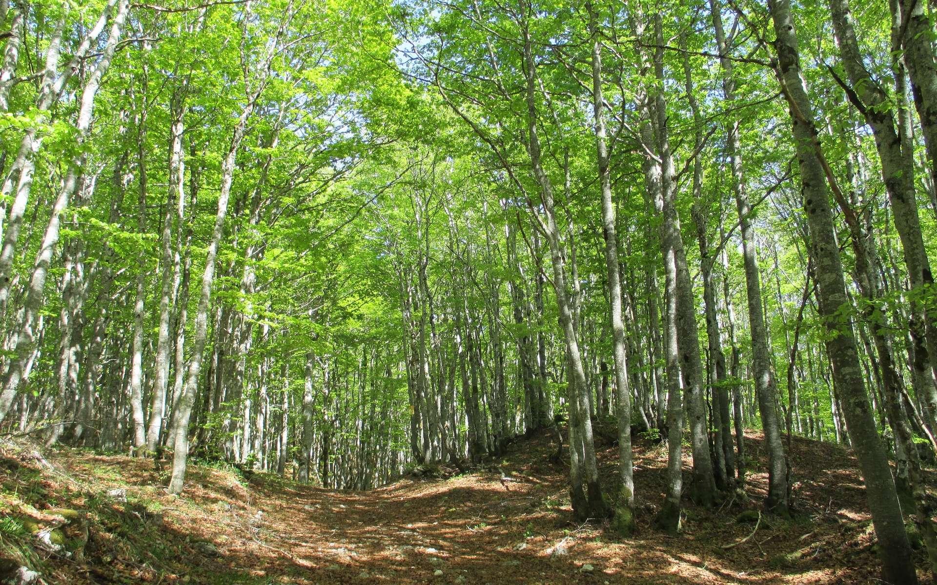 Une promenade en forêt réduit le stress. © Marie-Céline Ray
