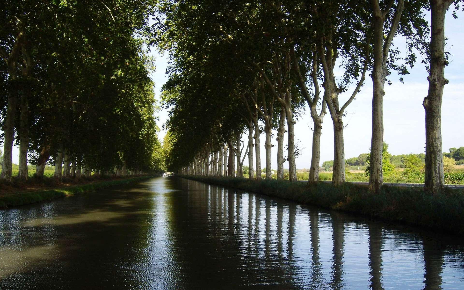 Canal du Midi, platanes plantés sous le Premier Empire (1804-1815). Wikimedia Commons, domaine public.