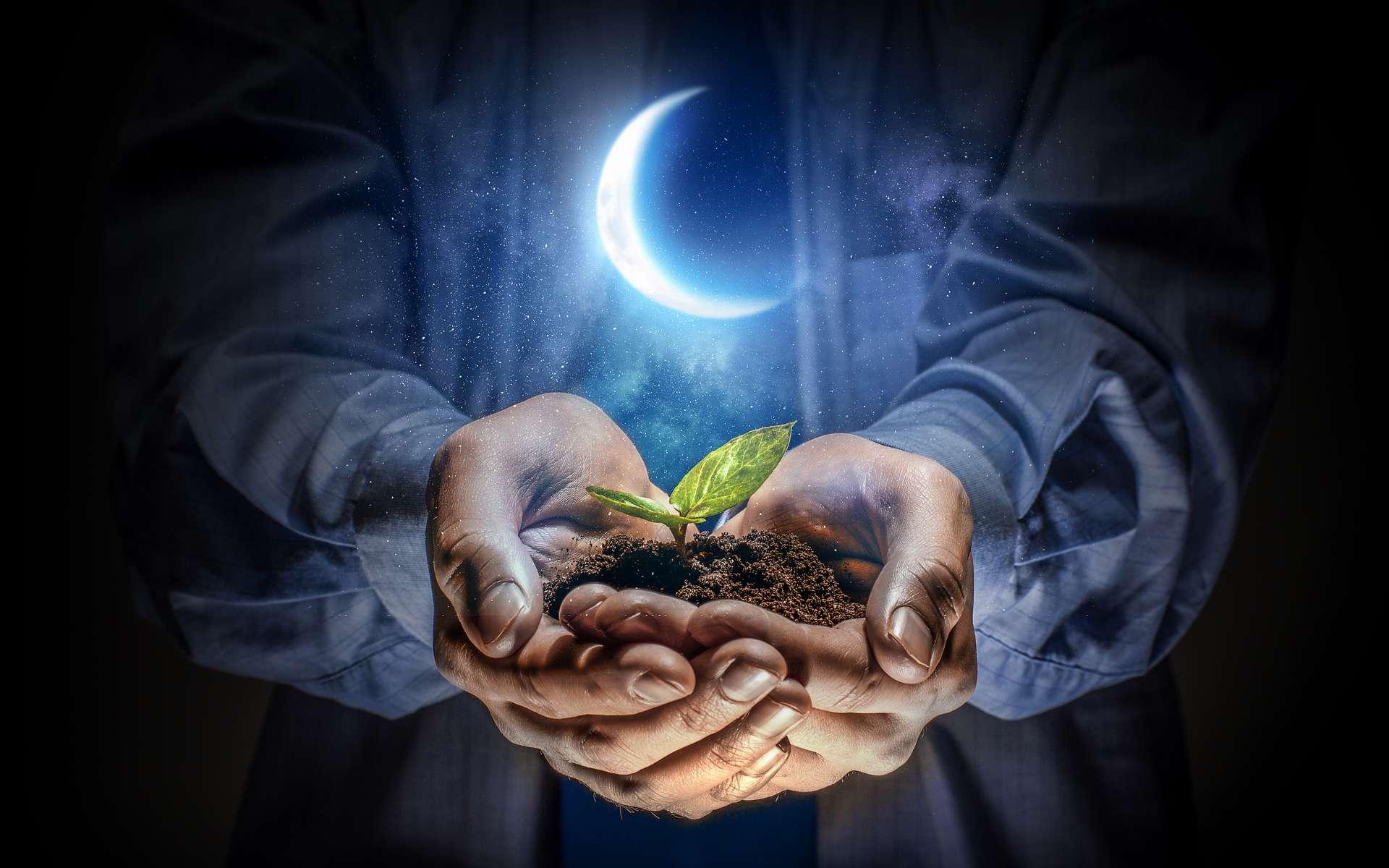 À la phase décroissante de la Lune, ou dernier quartier, semez les légumes-racines pour tenter d'optimiser vos récoltes. © Sergey Nivens, Adobe Stock