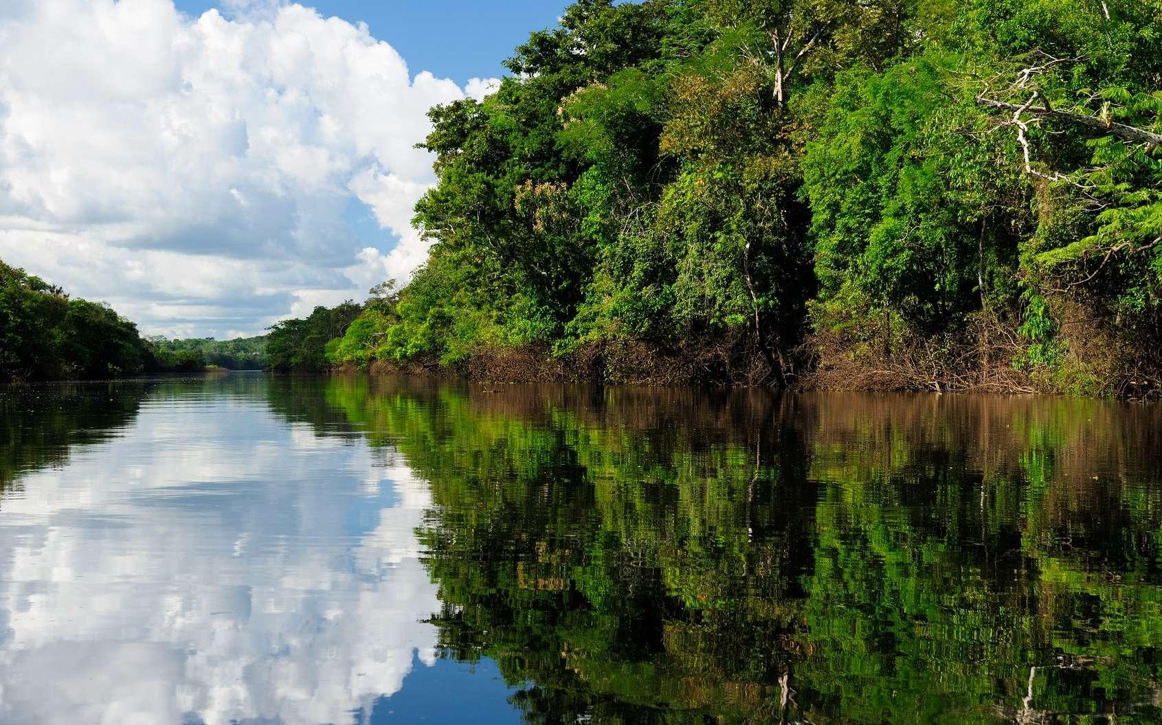 L'Amazone serait le plus long fleuve au monde. © Rafal Cichawa, Fotolia