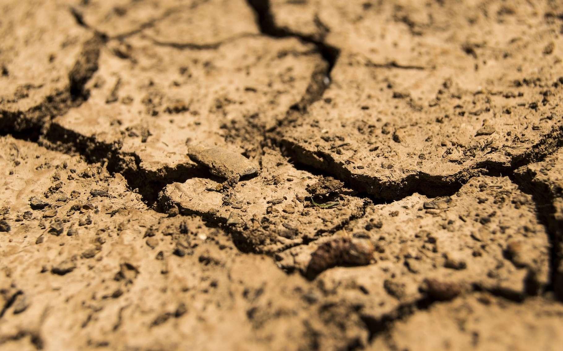 Le terme de stress hydrique renvoie à une notion de manque d'eau. © daeron, Licence Pixabay