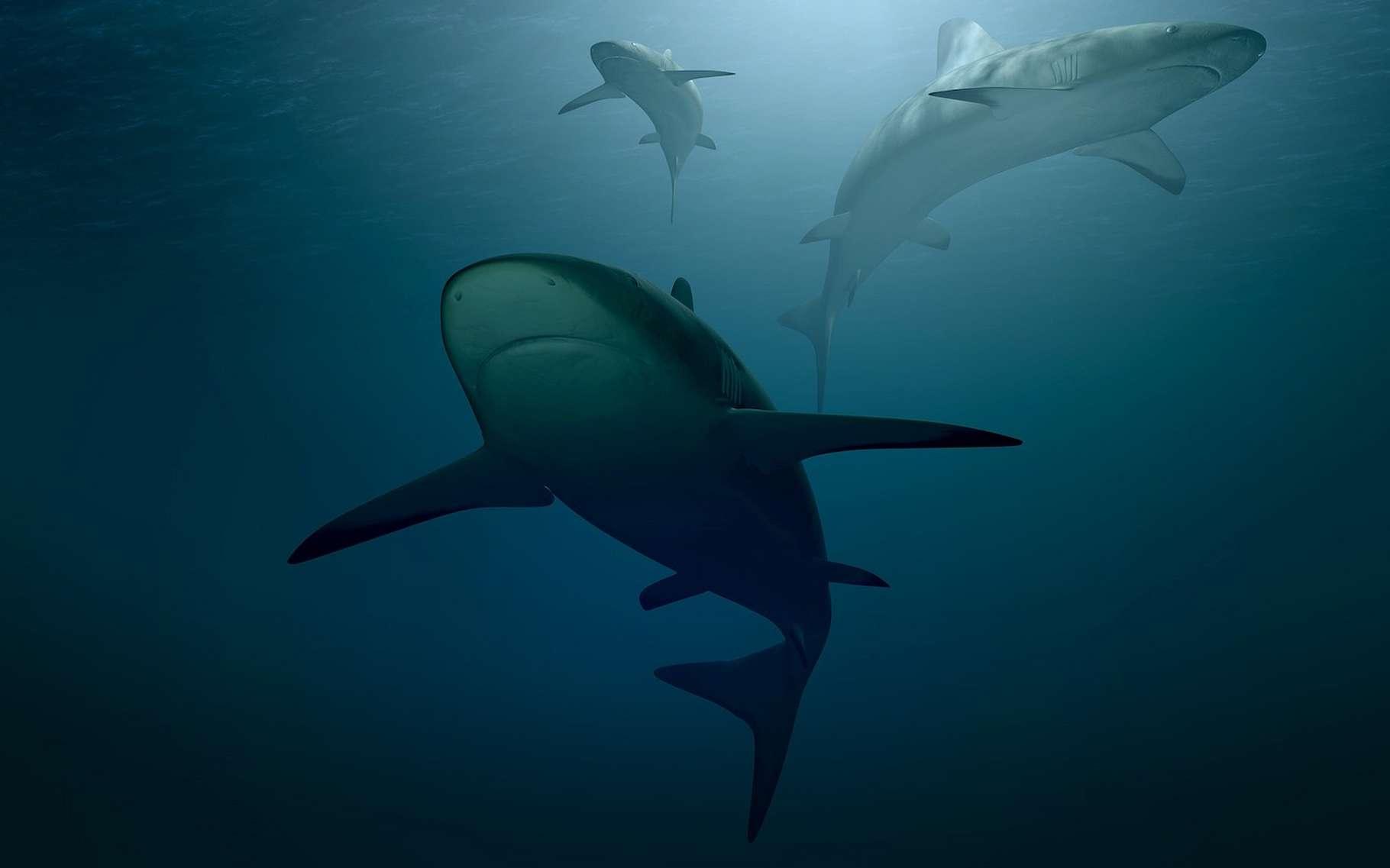 Pour David Gruber, professeur à la City University de New York (États-Unis), les requins sont des créatures formidables dotées de super-pouvoirs fascinants. Ainsi un incroyable sens de l'odorat ou des ampoules de Lorenzini qui leur permettent de détecter des champs électromagnétiques. Et la capacité d'émettre une lumière verte fluorescente comme nul autre sous l'eau. © PIRO4D, Pixabay License