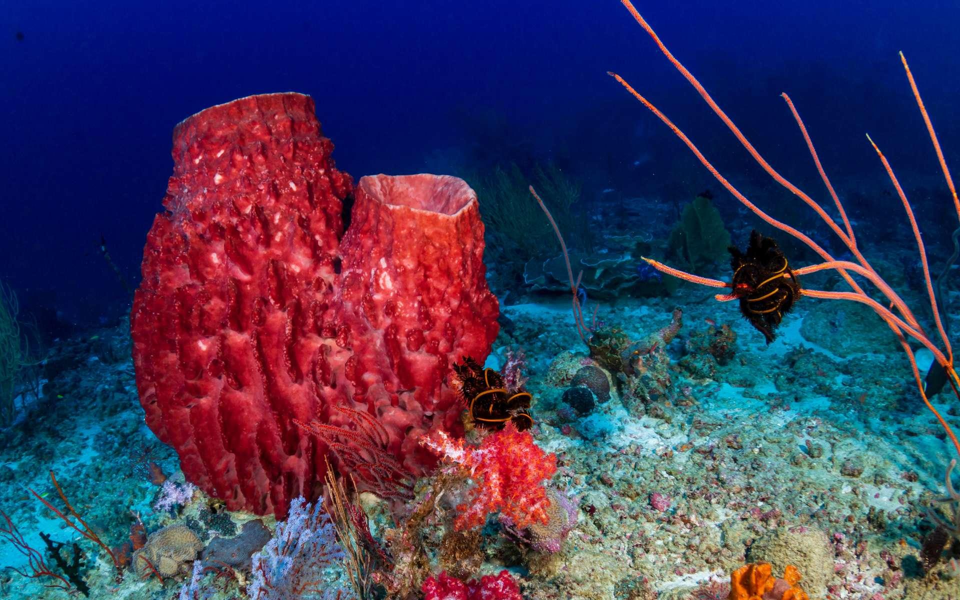 Les éponges seraient les premiers métazoaires à être apparus au cours de l'histoire de la vie sur Terre. © whitcomberd, Adobe Stock