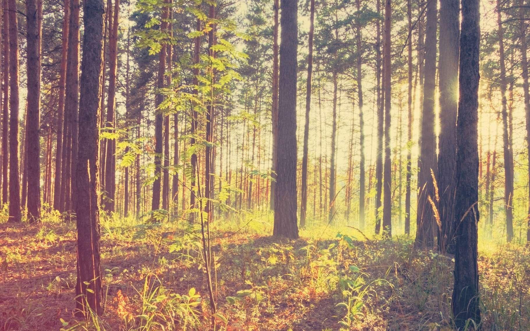 Quel est l'effet des arbres sur le réchauffement climatique ? © , Shutterstock
