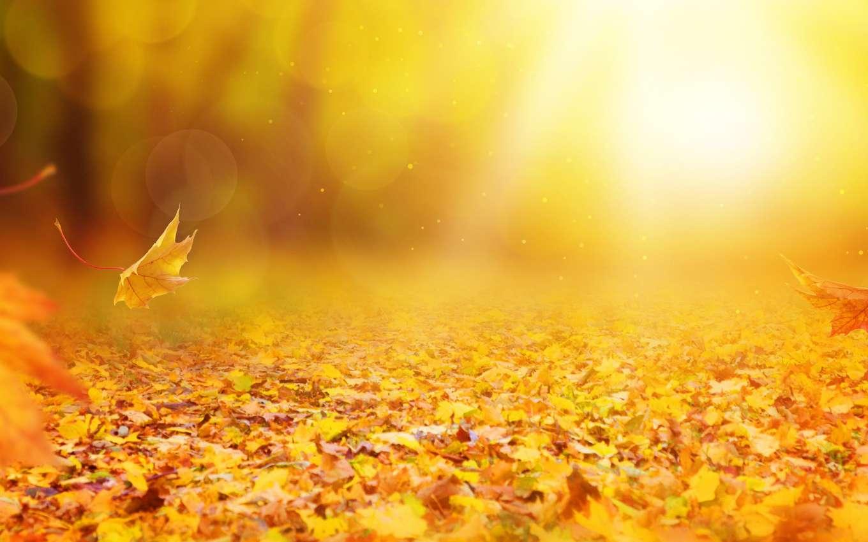 À l'automne, avant que les feuilles ne tombent des arbres, les forêts se parent de jolies couleurs. © Elena Schweitzer, fotolia