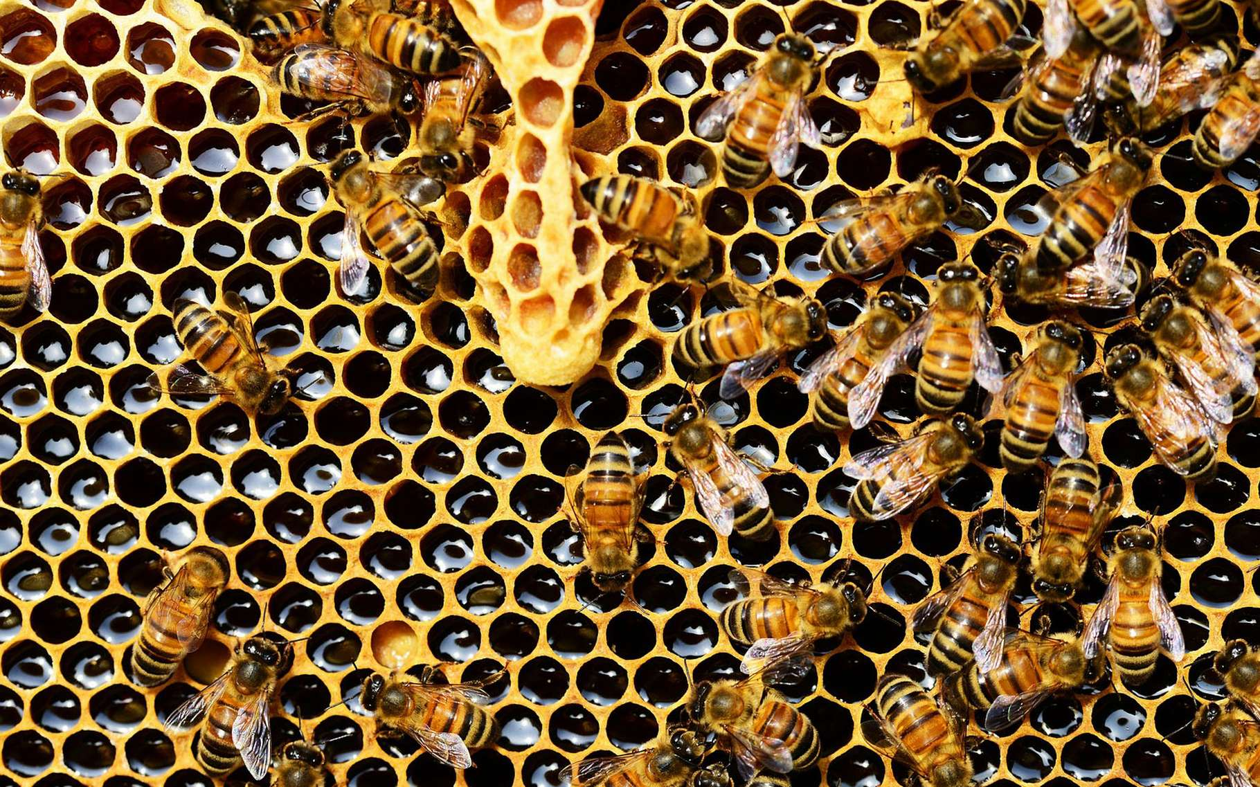 Les alvéoles d'une ruche.© PollyDot, Pixabay, DP