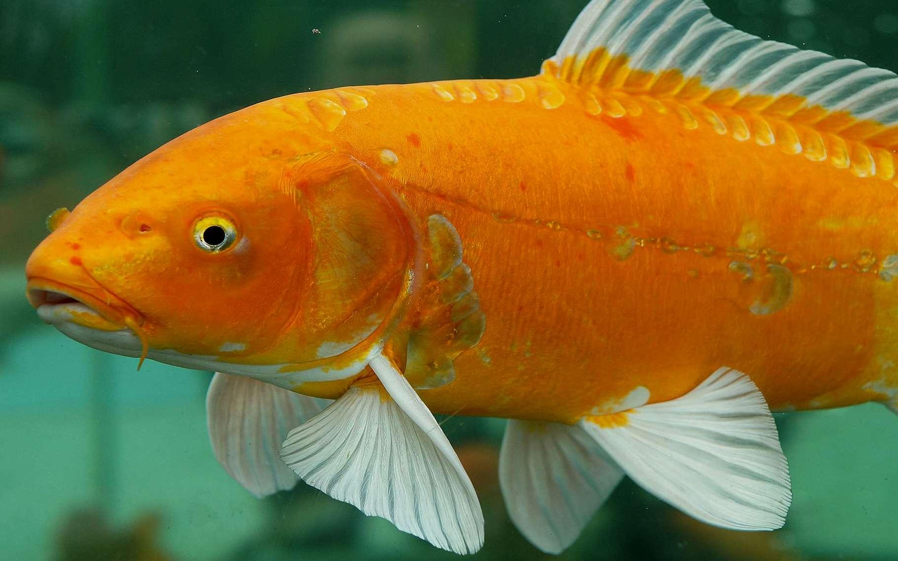 Inscrivez-vous pour beaucoup de poissons datant site