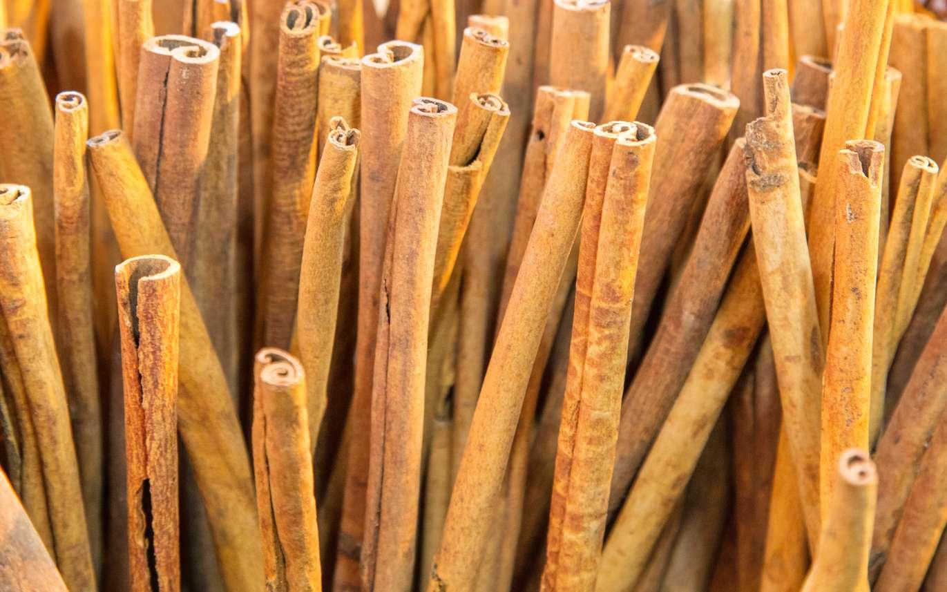 La cannelle est cultivée comme épice et plante médicinale, à l'origine, seule l'écorce des arbres sauvages avait une utilisation thérapeutique. © JCLobo, Fotolia