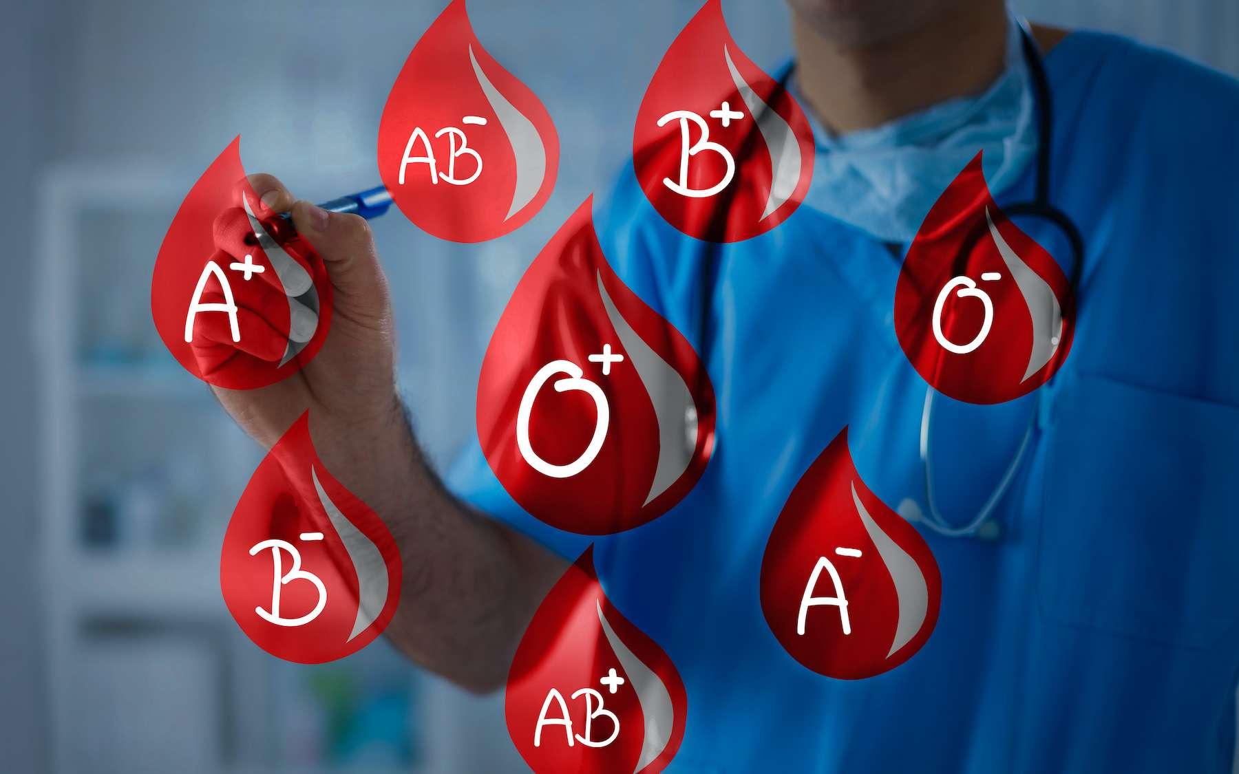 Il existe huit groupes sanguins fondés sur les systèmes ABO et Rhésus. © Cherries, Adobe Stock
