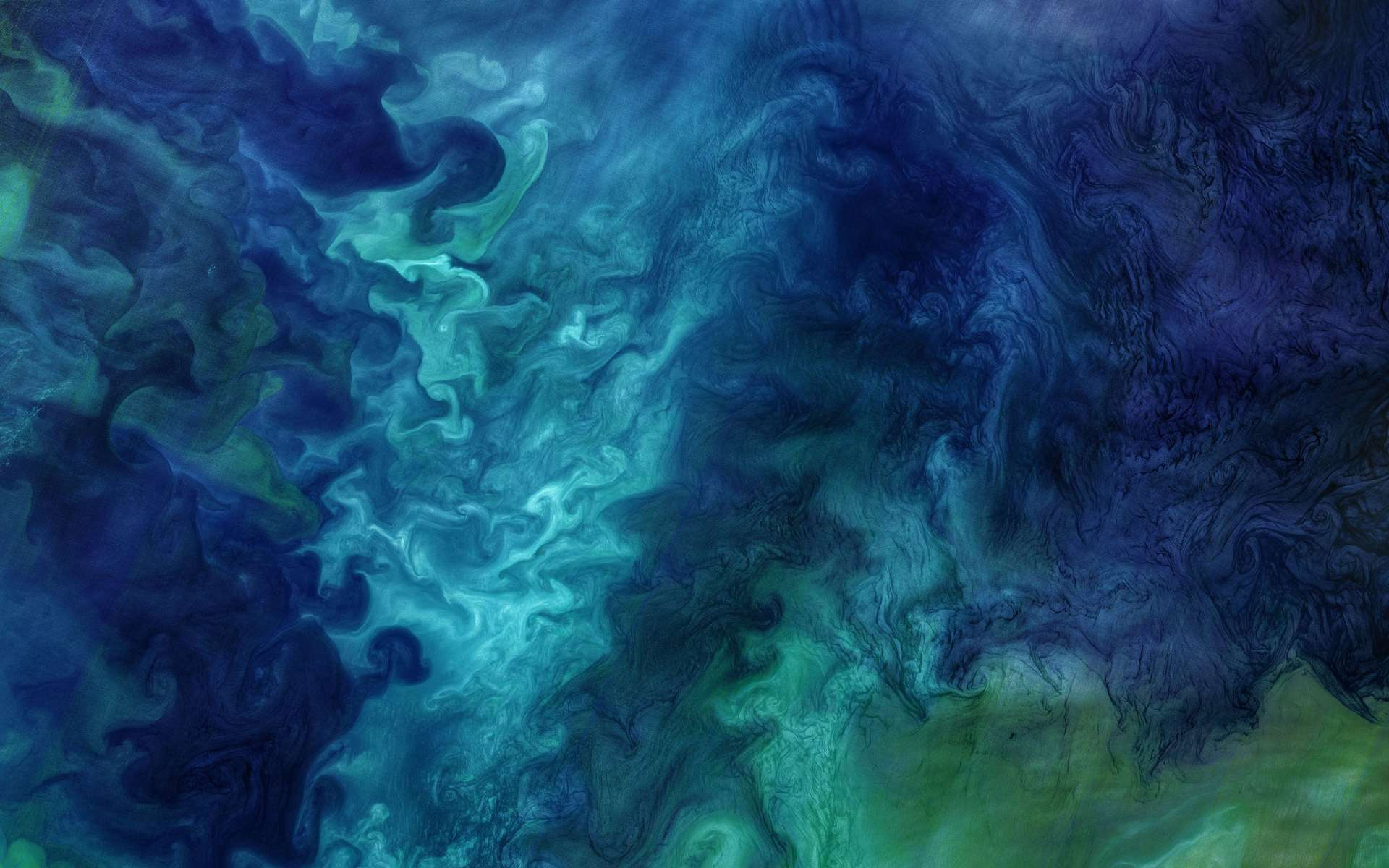 Efflorescence de phytoplancton dans la mer des Tchouktches. © Nasa's Marshall Space Flight Center