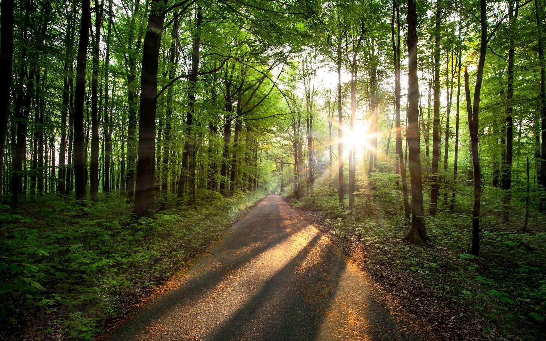 Participer à un projet de lutte contre la déforestation correspond à une façon de s'inscrire dans une démarche de compensation carbone © Evgeni Tcherkasski, Unsplash