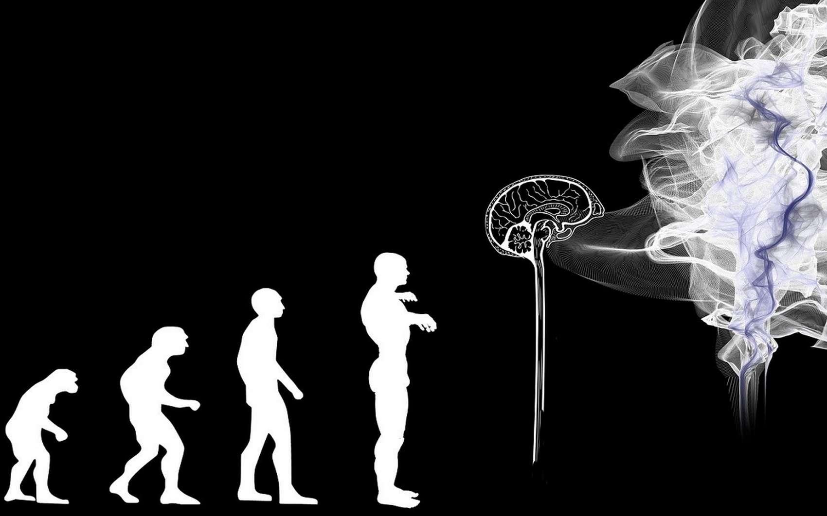 L'Homme descend-il du singe ? © geralt by Pixabay