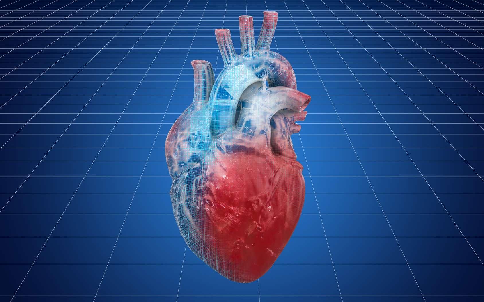 Des chercheurs américains ont réussi à imprimer des parties fonctionnelles du cœur. © alexlmx, Fotolia