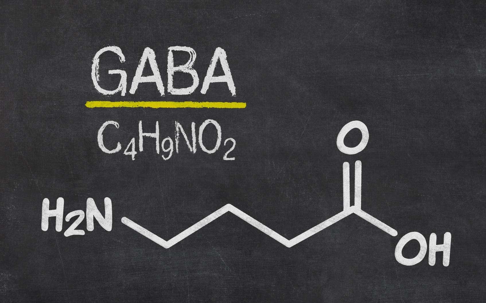 Le Gaba est un neurotransmetteur inhibiteur du cerveau. © Zerbor, Fotolia