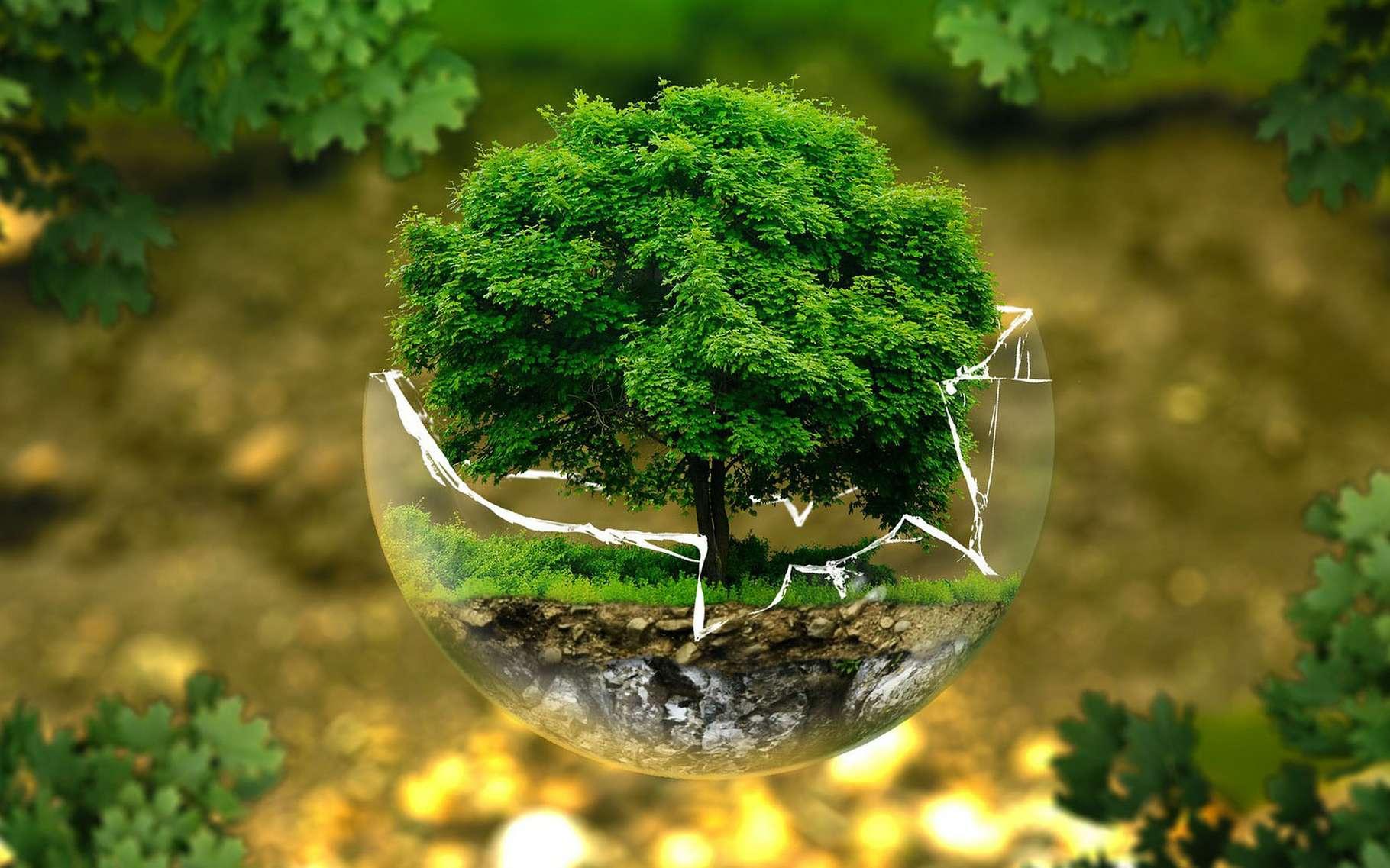 Qu'en est-il aujourd'hui de la Planète ? © Ejaugsburg, Pixabay, DP