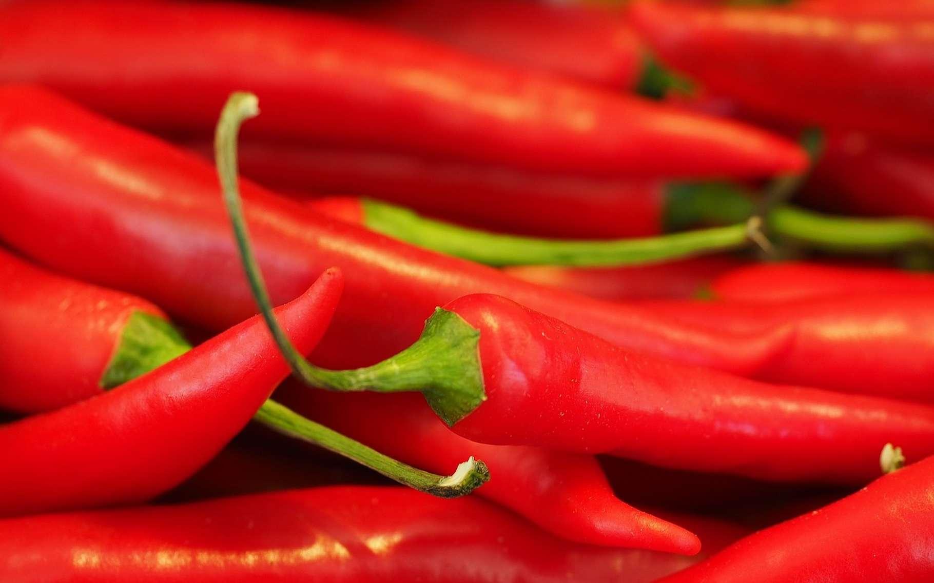 Le piment a des effets bénéfiques sur la santé, à condition de ne pas en abuser. © hans, Pixabay License