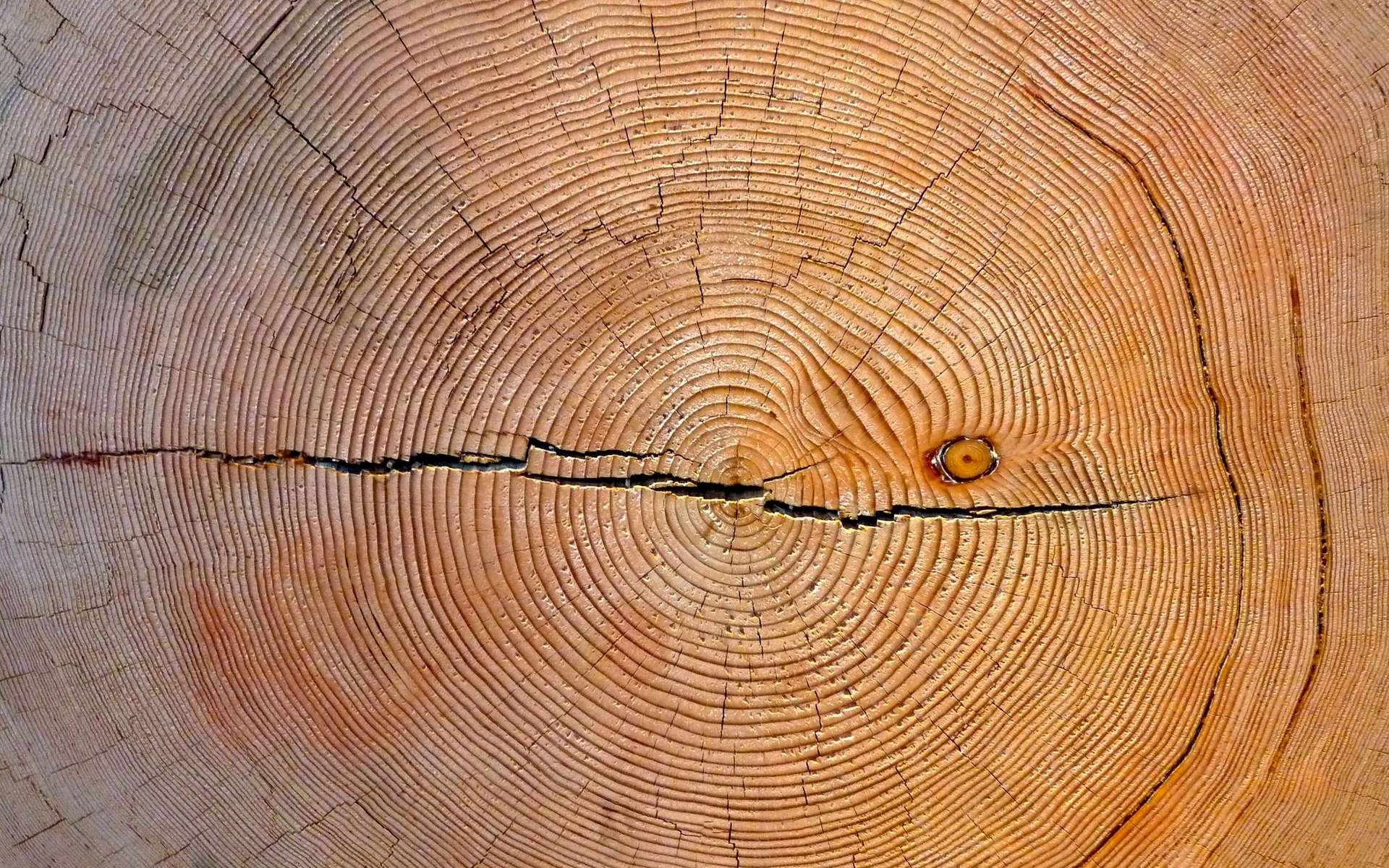 La dendrochronologie évalue l'âge de l'arbre en fonction de la largeur des cernes du bois. © Art Poskanzer, Flickr