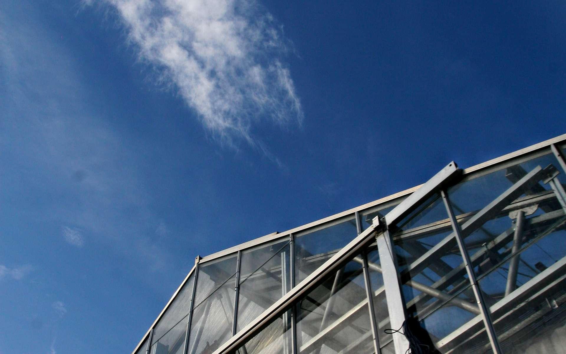 En plus d'être un gaz à effet de serre, le dioxyde de carbone provoquerait des dégâts directement sur les cellules. © Stockvault.net